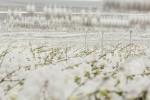 Over Ichtus Flowers & Plants