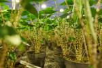 Ichtus Flowers & Plants